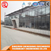 China Prefabricated Venlo Vegetable/Flower Tempered Glass Green House