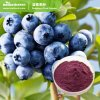 Natural Blueberry Extract Powder for Beverage Additives