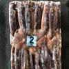 150-200 Wholesale Frozen Argentine Illex Squid