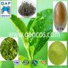 100% Pure Green Tea Extract