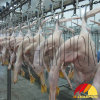 Poultry Slaughterhouse Using Overhead Transmission Line