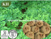 Pure Natural Management Konjac Glucomannan 80%, 90%, 95%by UV