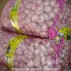New Crop Garlic Fresh Garlic Price