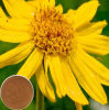 100% Natural Extract Pure Powder Arnica Montana