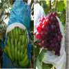 Anti-UV PP Non Woven Fabric Fruit Cover/Banana Bags