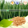 Dried Herbal Medicine Fructus Hordei Germinatus