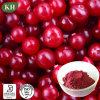 Cranberry Extract/Cranberry Powder; Proanthocyanidins 5%-60%, Anthocyanidins 10%-30%