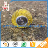 Semi Transparent Stainless Steel Bearing Small Plastic Gears