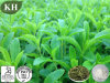 Supply High Quality Stevia Leaf Extract Steviosides 80%-95% HPLC