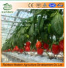 China Modern Hydroponics System for Commercial Agricultrue PC Sheet Greenhouse