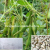 White Kidney Bean Extract (10: 1, 1%-5% Phaseolin)