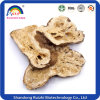 Atractylodes Lancea Extract Powder Used for Pharmacological Activities