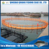 Cage Fish Farming, Floating Cage for Tilapia Fish