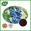 Blueberry Extract, Anthocyanidins15%-35%, Anthocyanins 15%-35%