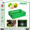 Plastic Collapsible Container Crate for Farm Harvesting