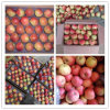 High Quality&Competitive Price Royal Gala Apple