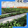 Low Price and High Yield Vegetable and Fruit Culture System