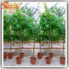 China Supplier Artificial Bonsai Coffee Tree or Cocoa Tree