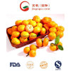 Export New Crop Good Quality China Mandarin Orange