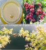 Top Honey, Organic, Pure Litchi Honey, No Antibiotics, No Pesticides, No Pathogenic Bacteria, Prolong Life, Health Food