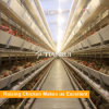Automatic battery layer chicken cage for layer/egg chicken/hen