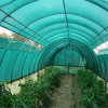 Green Color 50% to 90% Sun Shade Netting for Sale