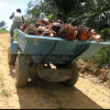Palm Oil Plantation Use Small Wheel Tractor (4 Wheels) Power Tiller