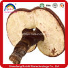 High Quality Pure Ganoderma Lucidum Factory Hot Sell