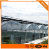 Commercial Multi-Span Film Greenhouse for Vegetable Tomato Strawberry Garden Products