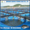 Aquaculture Fish Farm with HDPE Frame/PE Net Cage