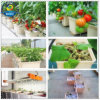 Dutch Bucket Irrigation System for Growing Tomato