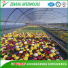 Galvanized Tube Single Span Green House Covered by High Quality Film for Farming/Agriculture