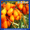 Chinese Herbal Extract Sea Buckthorn Juice Power