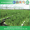 Garden Hydroponic Greenhouse Systems Tomato Greenhouse