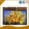 Xy Screen Anti-Light Series---Pet Crystal Hard Screen Free Ambient Light Rejecting Absorb Lamp Light