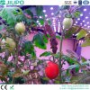 Blue Color LED Plant Grow Light for Agriculture Science Use