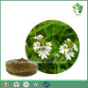 Improving Eyesight Herb Extract Flavone 4: 1 10: 1 20: 1 Eyebright Extract