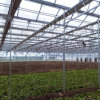 Hot Sale Agricultural Farm Polycarbonate Vegetable Greenhouse