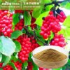 100% Natural Schisandra Chinens Extract