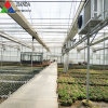 Film Covered Glass Green House for Vegetable Greens