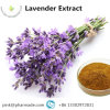 Lavender Herbal Extract Large Stock Online Sale