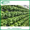 Hydroponics System for Greenhouse Vegetables