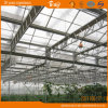 Nether Land Core Tech Multi-Span Glass Green House China Supplier