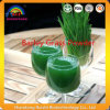 ISO9001 Certificate Natural Top Quality Barley Grass Powder