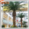 Large Artificial Palm Tree for Indoor Decoration