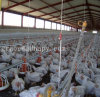 Poultry Broiler Production Equipment