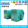 Best Quality Three Phase 6600V Motor