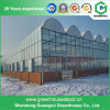 Agriculture Tunnel Vegetables PE Polytunnel Greenhouse for Sale