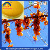 spray Dried Bulk Store Seabuckthorn Extract 10: 1powder for Tabletting