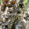 Premium Chinese Black Wood Ear Mushroom